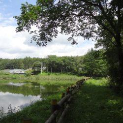 約1300坪、茅野市、菖蒲ヶ沢池のほとりの森に移住