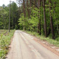 隣は森ですプライベート感ありです