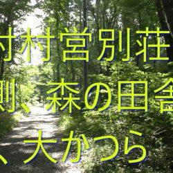 森の田舎暮らし、原村村営別荘地南側の大かつら山林!南道路