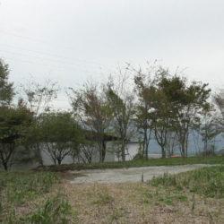 西側は広葉樹があります