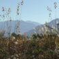 南側には山の眺望(南アルプスの眺望があります)