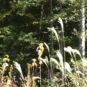 東側の山林を現地から見た写真です