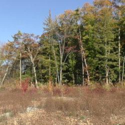 東側には山林があり鳥の声がきもちいいです