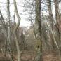 広葉樹が多い森です