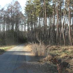 南側舗装道路