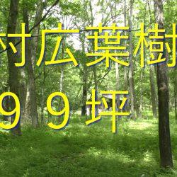 原村移住、599坪の広葉樹が気持ちいい、森の暮らし