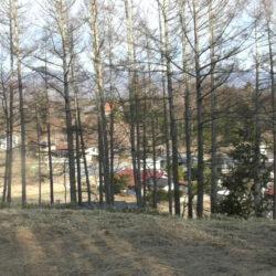 南東側には隣地の樹木が生えております