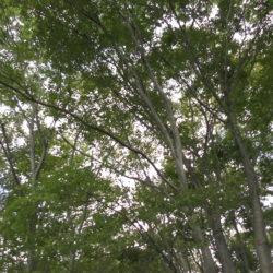 原村深山、北側が原村らしい防風林と畑と山が広がる広葉樹の森661坪土地C区画