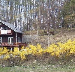 春には黄色の綺麗な花々がたくさん咲きます(周辺)